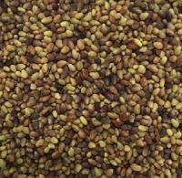 High Quality Forage Berseem Red Clover Seed , on edible Seed, Carrot Seeds ,