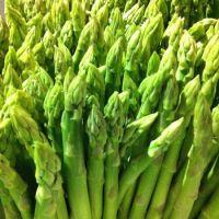 Good price high quality fresh green asparagus
