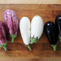 Fresh eggplant high quality