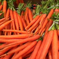 Fresh Carrots With Good Price