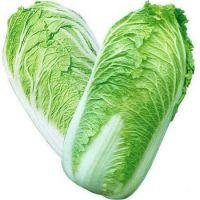 New Harvest Fresh Celery Cabbage