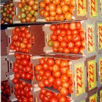 Fresh Cherry Tomatoes Fresh Tomatoes