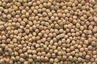 TOP QUALITY CHICK PEAS Wholesale