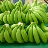 Bananas- Fresh Bananas