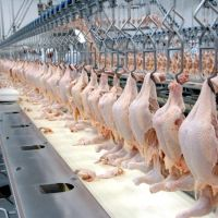 Frozen Quality Frozen chicken Meat / Fresh / Frozen /