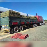 Alfalfa Hay Lucerne Hay Bales & Other Animal Feeds