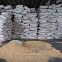 HIGH QUALITY MILLING WHEAT