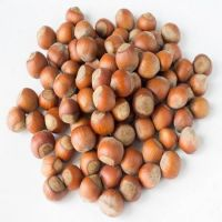 Supplier of Quality Hazel Nuts