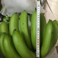Fresh Banana , Fresh crop, ready to export , Cavendish Banana