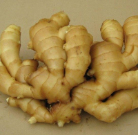 Top Grade Fresh Ginger - Air dried Ginger