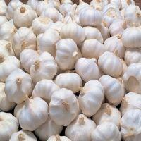 Grade 1 Quality Fresh white garlic With Cheap