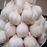 Pure Red and White fresh garlic - High Quality