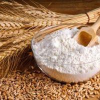 100% best grade Wheat Flour Semolina