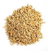 100% good Oat Grain