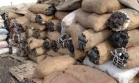 Coal and charcoal for sale low price