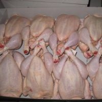 High Quality Halal Frozen Whole Chicken  Wholesale halal frozen whole chicken For Sale Halal Frozen Whole Chicken Best Price