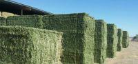 Premium Alfalfa Hay/Alfalfa Hay for animal feed