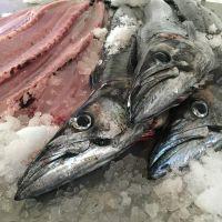 Snoek fish, Snoek fish fillet, Snoek fish whole