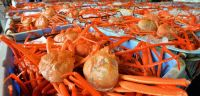 Snow crab whole and legs
