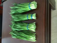 fresh matsutake mushroom white onion cold storage penang cold life storage cold storage for flowers