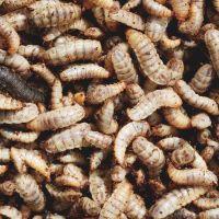 Dried Black Soldier Fly Larvae