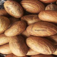 100% Bitter Kola Nuts/Garcinia kola Nut For Sale