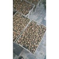 Top Shell Supplier