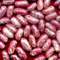 Export Quality New Crop Light Speckled Kidney Beans at Best Rate