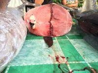 wholesale Price Yellow Fin Tuna