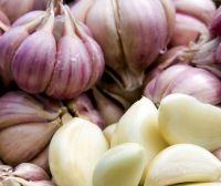 Fresh White Garlic Purple Garlic
