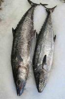 WHOLESALE FROZEN/FRESH/SMOKED KING FISH