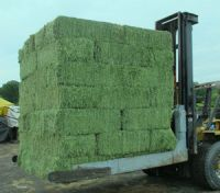 Natural Cattle Alfalfa Hay Animal Feed for sale