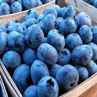 Good Quality Fresh Berries Blueberry