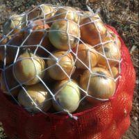 White Fresh Onion For sale