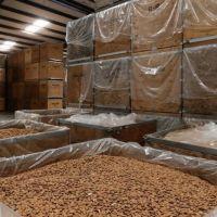 Almond Nuts, Sweet California Almonds