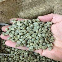 Grade A Arabica and Robusta Coffee Beans