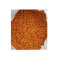 Red Lentils Whole high quality wholesale