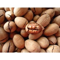 South Africa Dried Cheap Wholesale pecan halves pecan nuts on sale