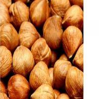Hazelnuts Kernel , Dried Hazelnuts Kernel Hazelnut, Quality Hazel Nuts Grade A