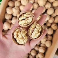 High Quality 185 Washed Thin-skinned Walnut In Shell