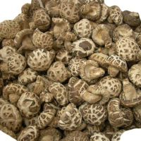 Quality Dry and Frozen Shiitake Mushrooms