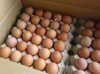 Brown Chicken Eggs