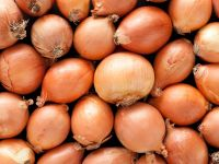 Yellow Organic Fresh Onion In Bulk For Export