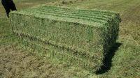 High quality Alfalfa Hay
