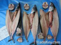 Sell Atlantic Mackerel