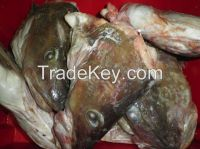 Atlantic Cod Heads