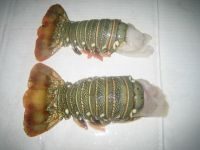 Sell Frozen Lobster Tails