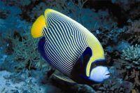 We supply high quality ornamental fish and aquarium plants from Sri La