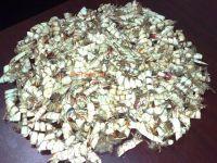 sell dry shrimp shell