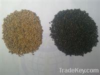 Sell Sesame Seed